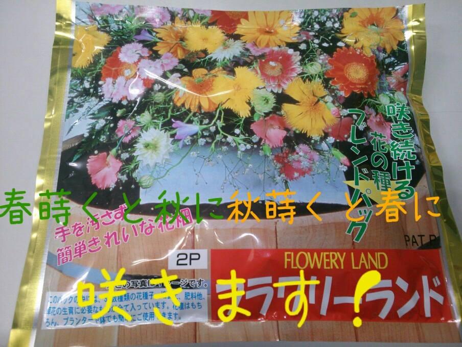 お花が次から次へと!